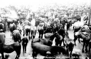 004025 - Redruth horse market - 08Aug1914